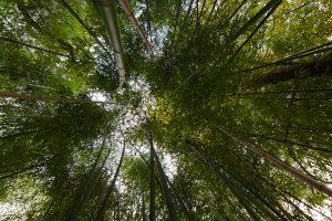 Avantages clôtures jardin en bambou